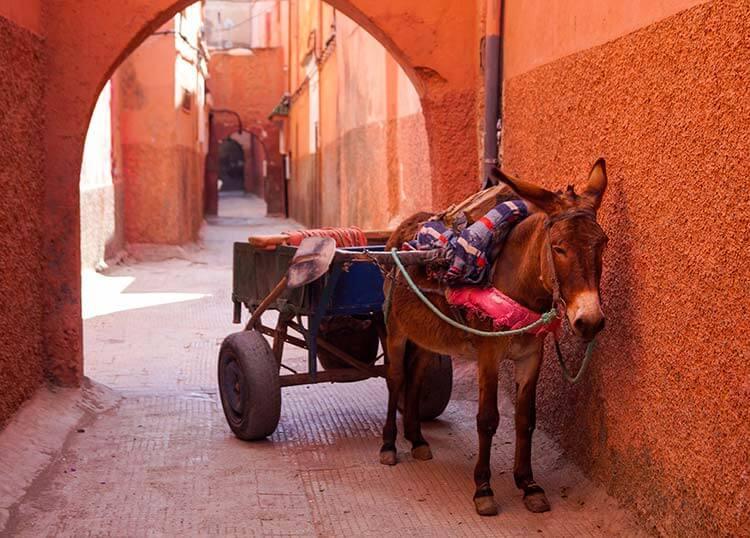 Ezel met kar in smal straatje Marrakech