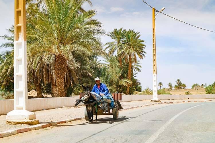 Man met ezel en kar met palmbomen in Marokko