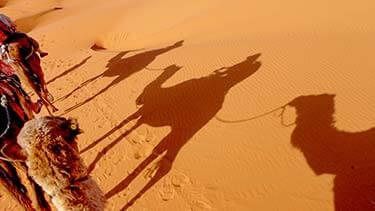 Schaduw kamelen in de woestijn