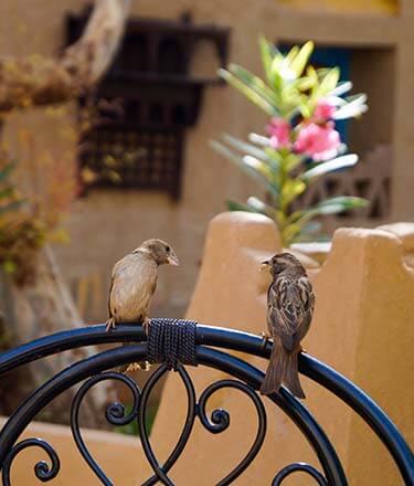 Vogeltjes op stoel